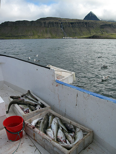 "Djúpavík. Finally a trip on the fjord with the boat ""Djúpfari"". - And some fish... (25 August 2010)"