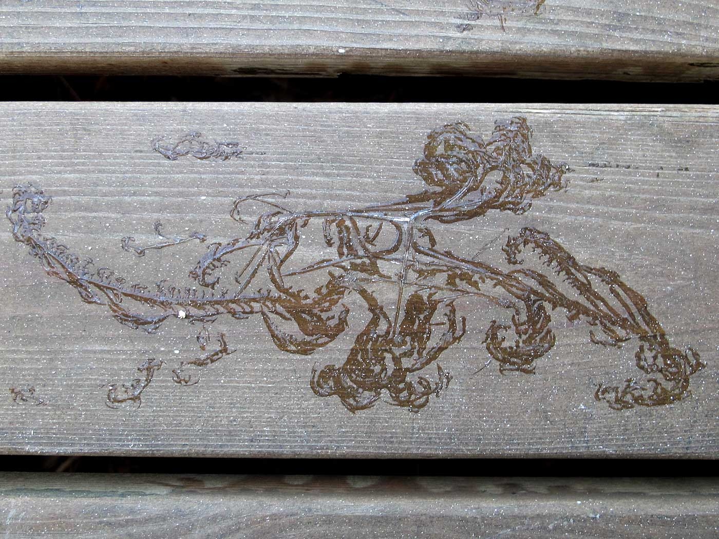 On wood. Frozen plants. - I. (3 March 2013)