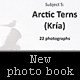 My new photo book - Subject 5 - Arctic Tern (Kría) available now!